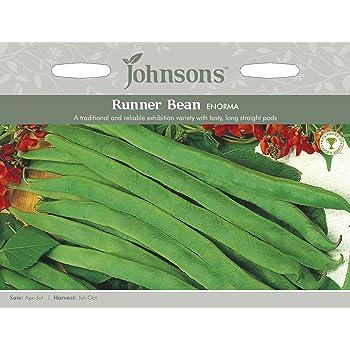 Johnsons UK//JO//PB Runner Bean Moonlight