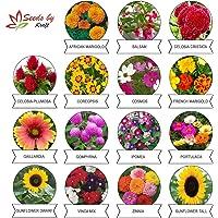 Kraft Seeds Flower Seeds, Heirloom Seed, High Germination Seeds (Pack of 15)