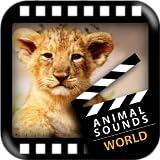 Mejores Animales Mundo