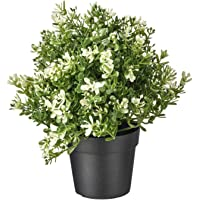 Artificial Thyme Plant With Plastic Pot (Green, 1 Piece,50 x 17 x 9Cms)