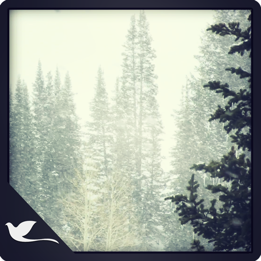Snowy Pine Trees (Kindle Fire Background)