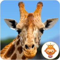 African Wild Life Animals Photo Jigsaw Puzzles - Educational and good brain practise for kids, toddlers and preschoolers