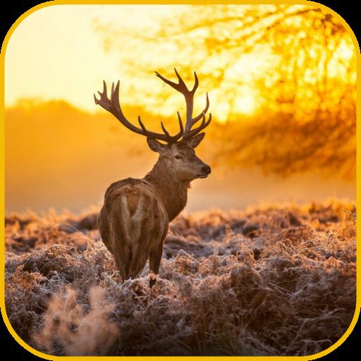 Deer Wallpaper -