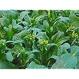 10 particules Mini Bonsai Graines Wisteria arbre intérieur plantes ornementales fleurs Graines