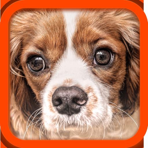 Hund Übersetzer (Englisch-portugiesisch-übersetzer)