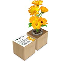 Eco-Woody   Regalo ecologico e sostenibile   Cubo di legno magnetico con semi di Calendula   Kit per la coltivazione…