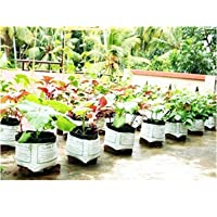 Elamgreen Grow Bags For Plants -10 Qty 30X30X25 Cm Vegetable Seeds For Home Garden