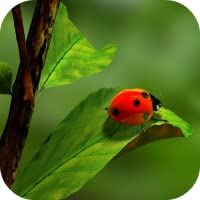 Ladybug Wallpapers