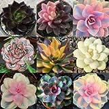 Oce180anYLVUK Semi di piante grasse, 100 pezzi/borsa Semi di piante grasse Aspetto adorabile Semi di giardino estetico…