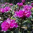 Alpine Flowers 1