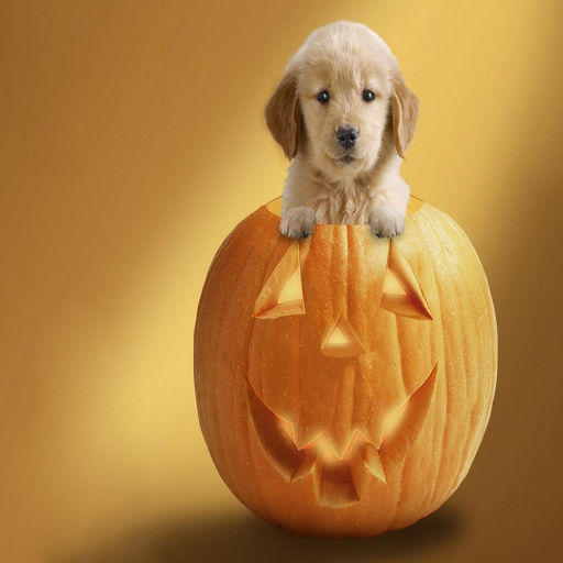 (Halloween Baby Dog Live Wallpaper)