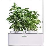 Odyseed-Orto da interno 100% Bio-Coltiva le erbe aromatiche-Basilico cannella e basilico limone inclusi