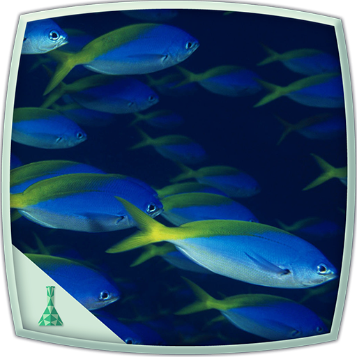 bluish-fishes