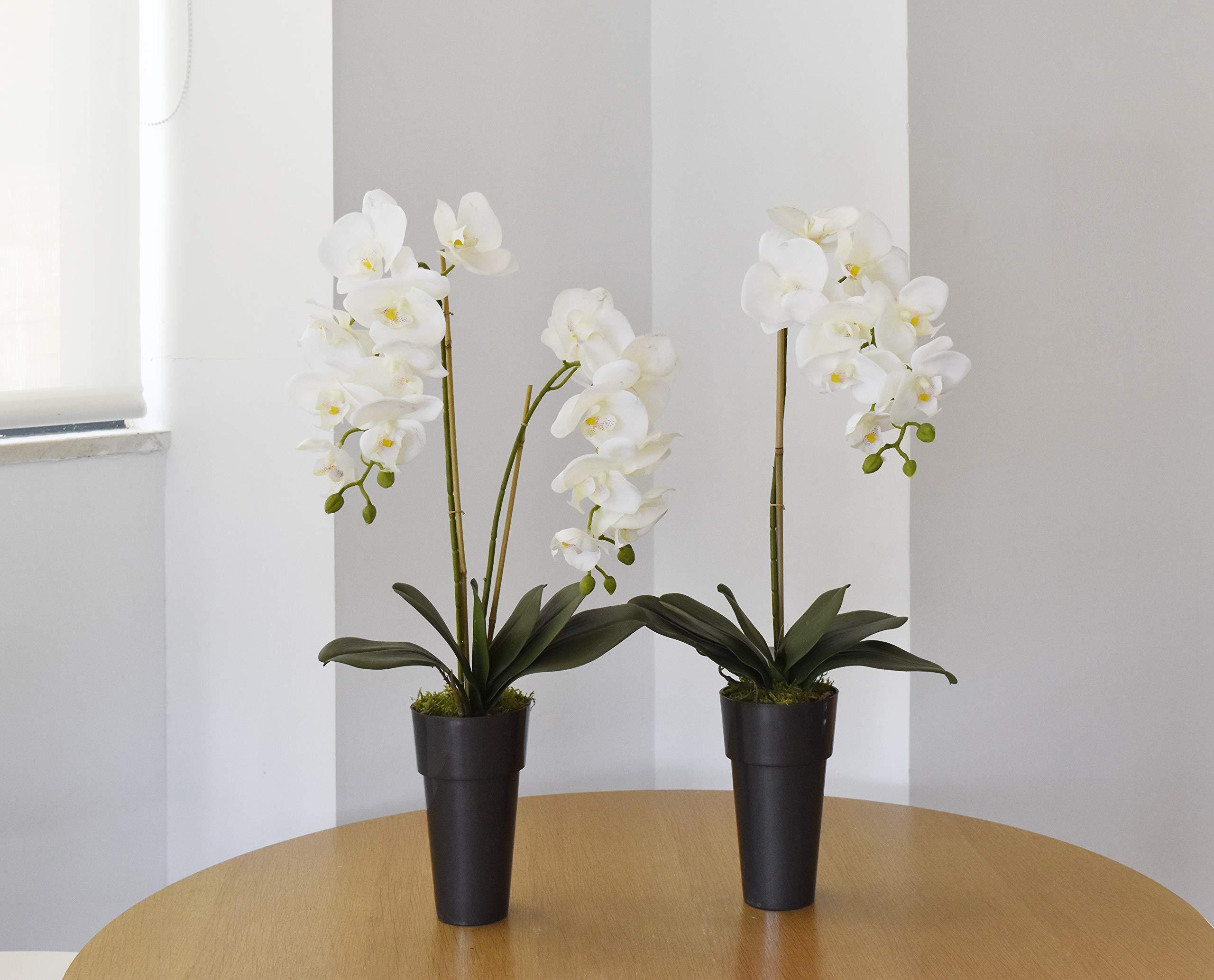 Maia Shop Flores Artificiales de Orquídeas, Phalenopsis con Maceta, Contiene Musgo Preservado, Ideal para Decoración de Hogar