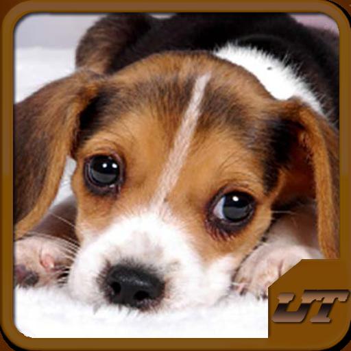 dog-breeds-quiz-hd