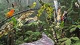Tropischer Wald [Download... Ansicht