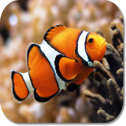 Clown Fish HD Wallpapers (Free Bible Dictionary Download)