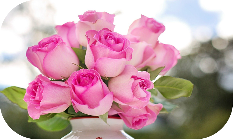 Hd Rose Wallpaper Amazon In Appstore For Android