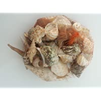 SEVA Mix Size 450 gm Pack for Aquariums/Art and Crafts/Table Decoration (Multicolored, Mix, Sea Shell)