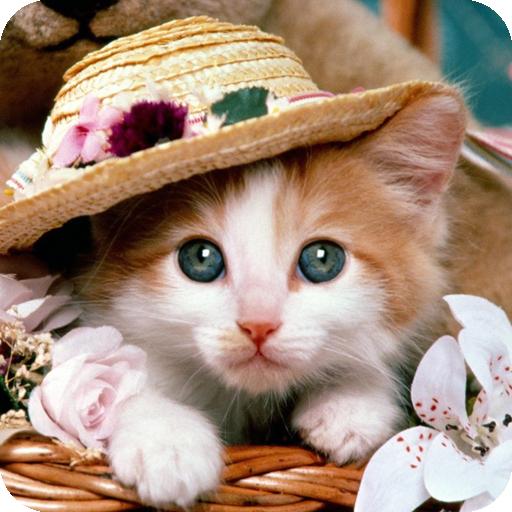Cute Cat Wallpaper Amazon De Apps Fur Android