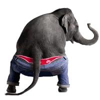 Tanzen reden Elefanten
