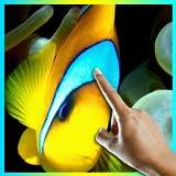 Yellow Clownfish in Ocean LWP