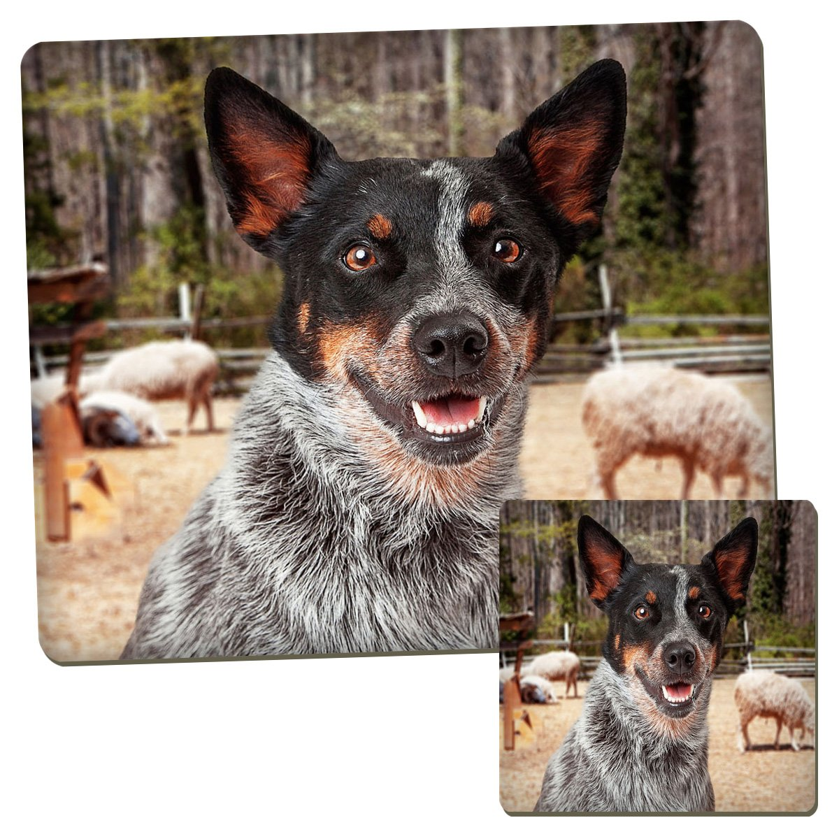 Australian Cattle Dog Animal Kids Placemat & Coaster Set 012