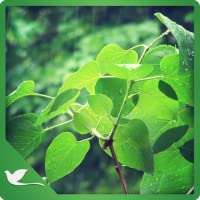 Natural Meditating Ambience - Enjoy the Calm Ambience on Your Screen