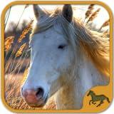 Pferde Spiele Gratis Deutsch - Puzzle Spiele