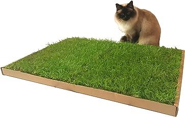 CARNILO Katzengras - Echter, frischer, saftiger Rasen für Katzen