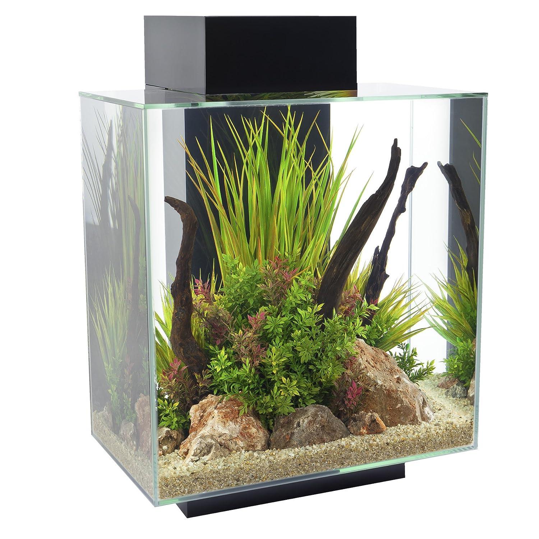 décoration aquarium edge