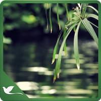 Green Meditation - Go Green with Meditation