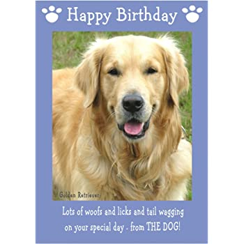Golden Retriever Dog Birthday Card Amazon Co Uk Office Products