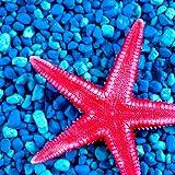 Collage de photo d'étoile de mer