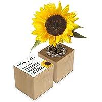 Eco-Woody   Regalo ecologico e sostenibile   Cubo di legno magnetico con semi di Girasole   Kit per la coltivazione…