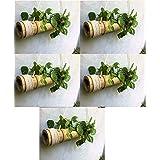 COIR GARDEN Bamboo Planter, 40-55 cm, 5 Pieces