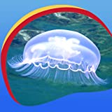 Kühle Jellyfish Live Wallpapers