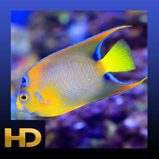 peaceful-aquarium-hd