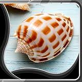 Sfondi Shell Live