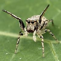 Araignée espèces Trivia Quiz