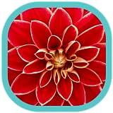 Fleurs HD Fonds d'écran