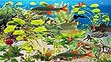 Clown Loach Aquarium [Téléchargement]