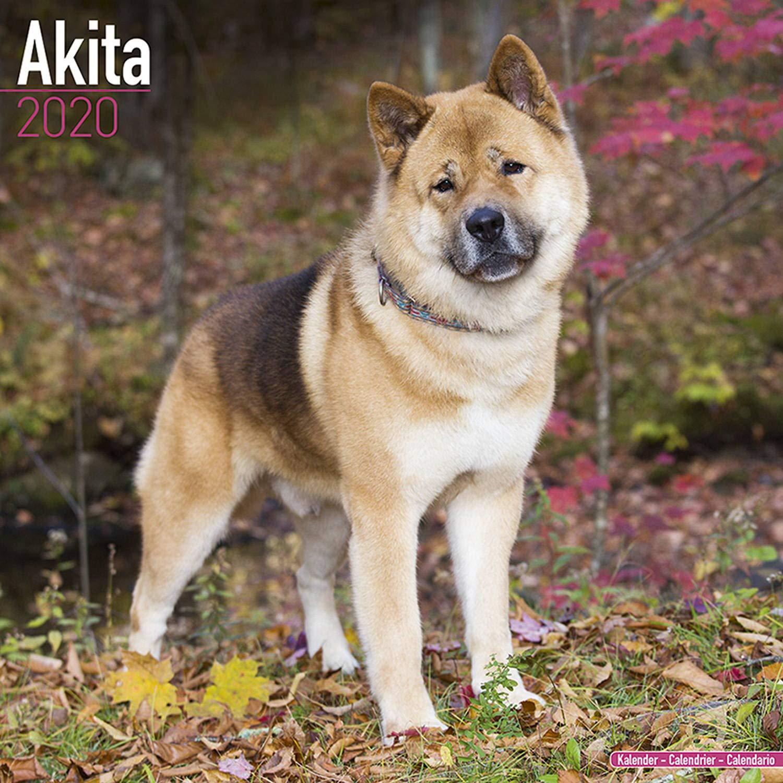 Akita Calendar 2020