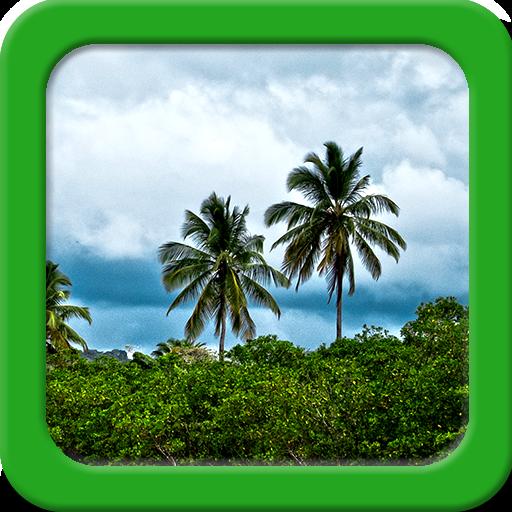 Jungle Live Wallpapers (Tropischen Wald Hintergrund)