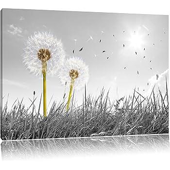 pusteblumen auf wiese schwarz wei format 100x70 auf leinwand xxl riesige bilder fertig. Black Bedroom Furniture Sets. Home Design Ideas