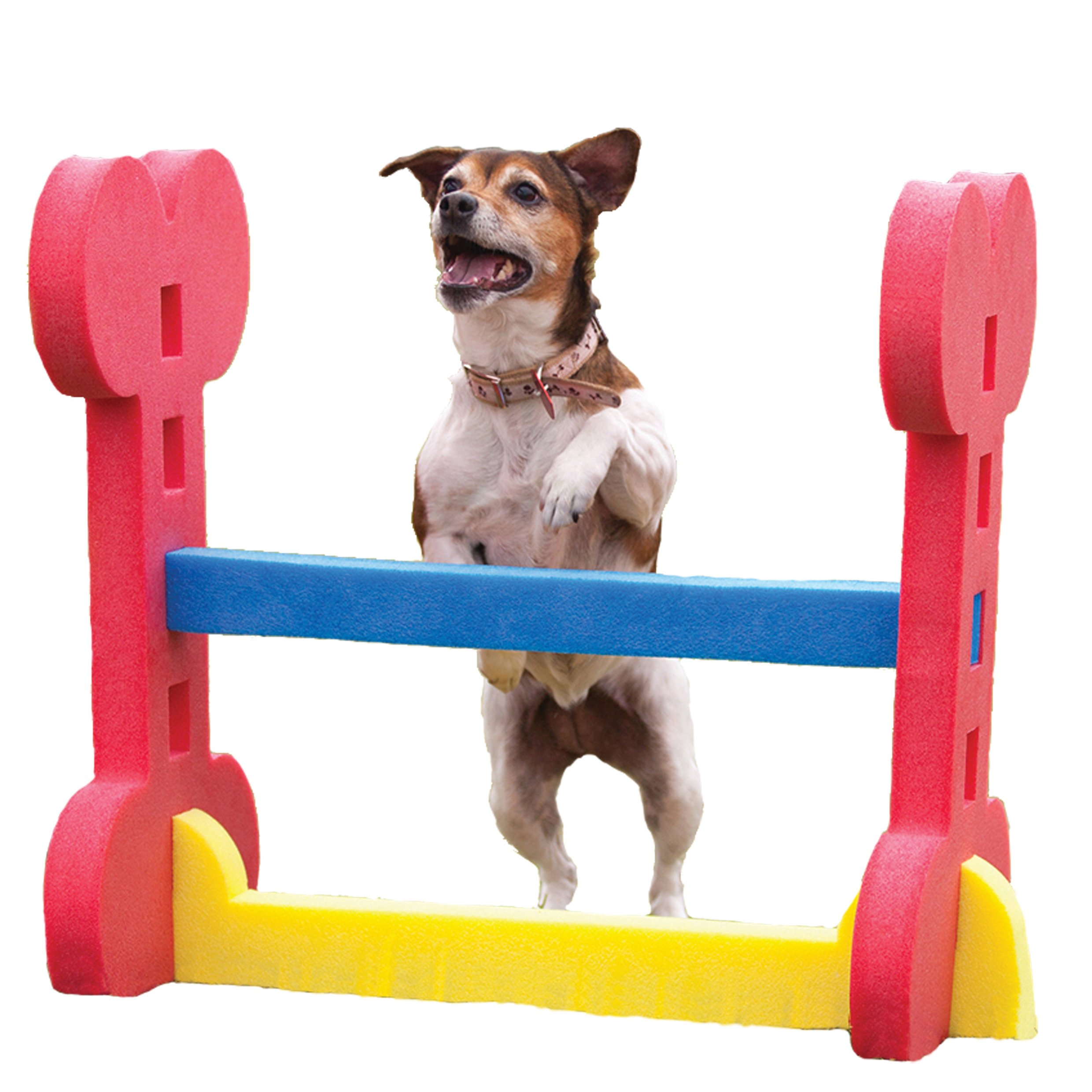 Agility Small Dog Hurdle