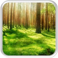 Sunny Forest 2D Live wallpaper