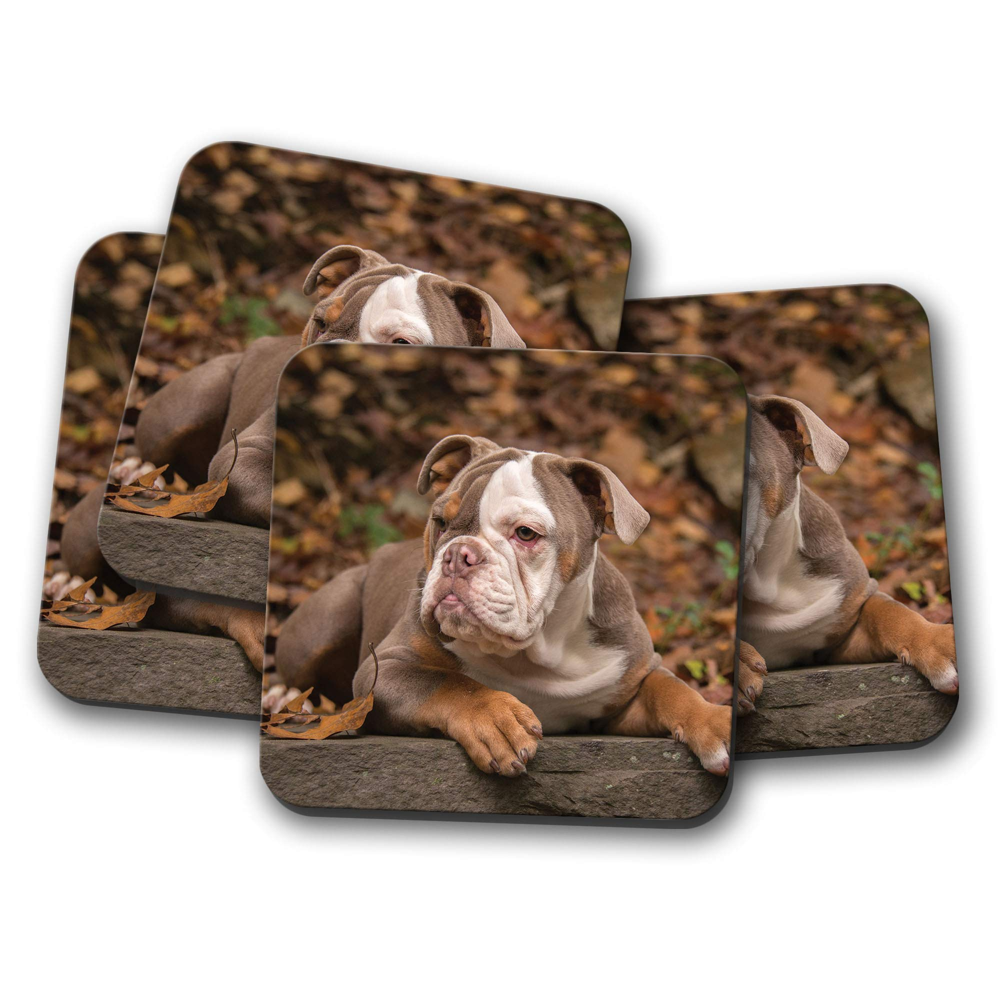 4 Set – Adorable American Bulldog Puppy Coaster – Pup Dog Cute Pet Gift #12471