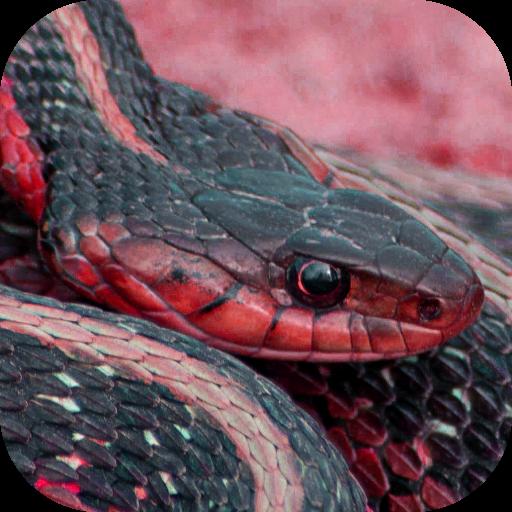 Snake Vision Camera Effect (Snake-cam Android)
