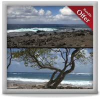 Beach Tree Camp - Wallpaper & Themes for TV